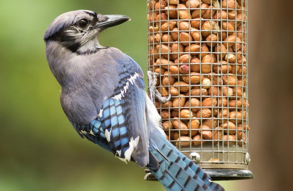voedersilo vogels