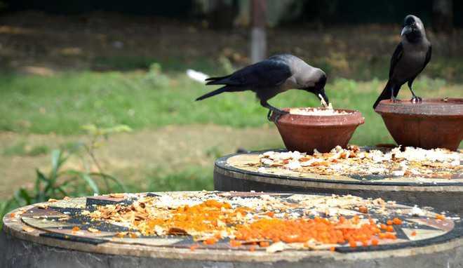vogel voedertafel
