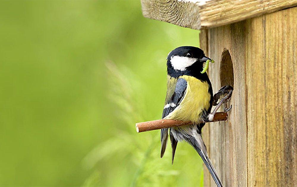 vogelhuis koolmeesje