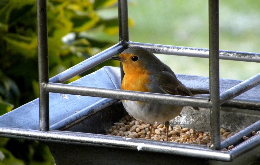 vogelhuisje roodborstje